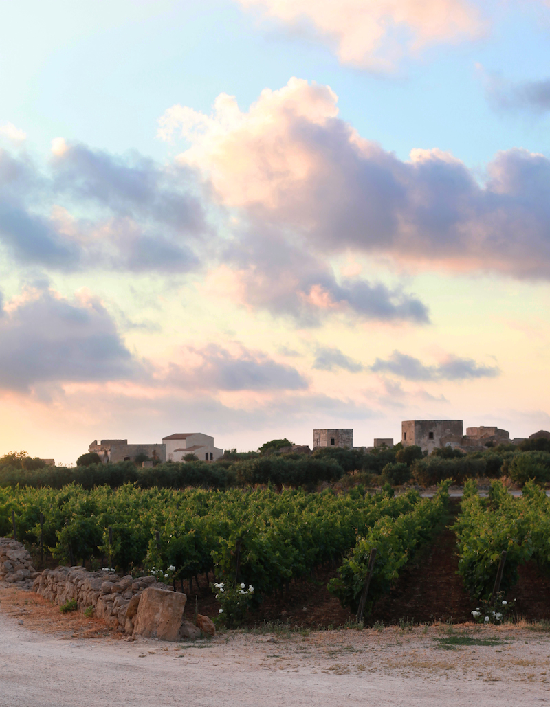 Vineyards of Sicily